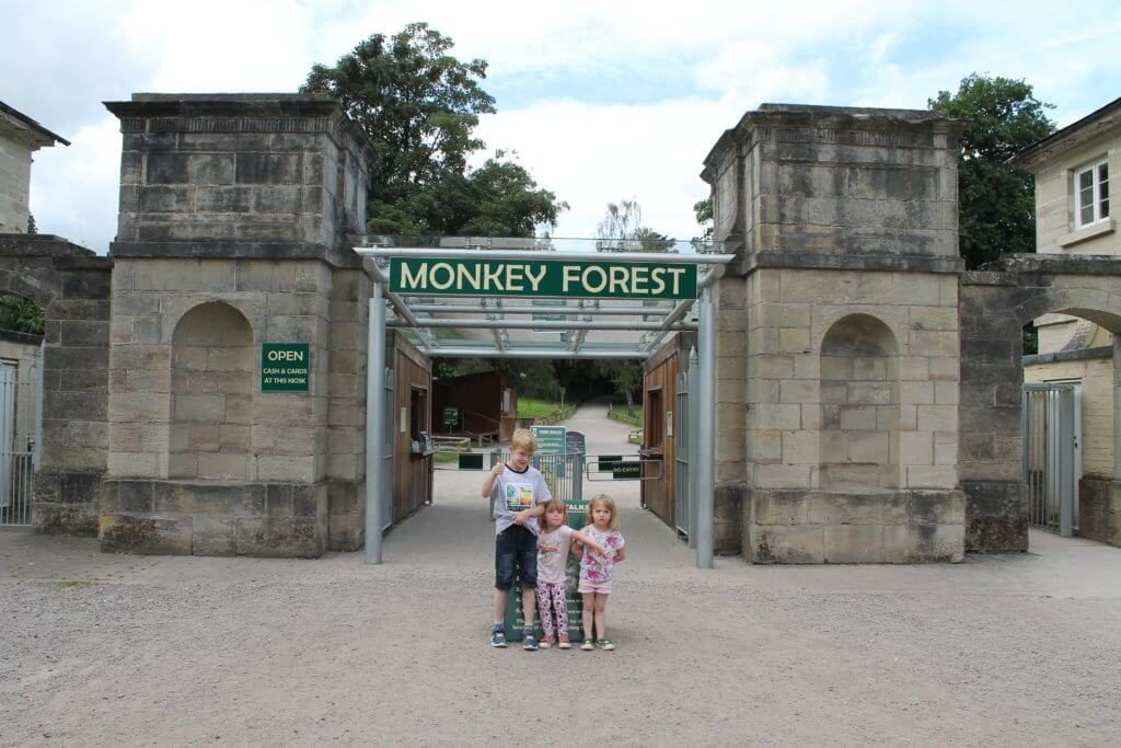 The Monkey Forest - Review