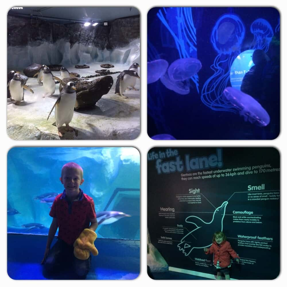 sea life centre review